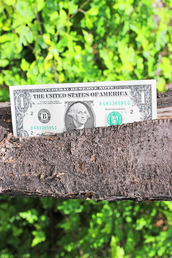 Download Money tree stock photo. Image of dollar, fortune, cost - 31370566
