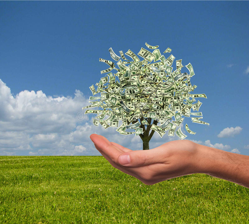 Money tree. Business growth concept. Money tree in the middle of green meadow royalty free stock images