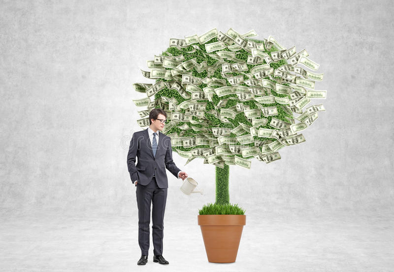 Money tree. Businessman watering pot with money tree. Concrete background. Concept of profit stock photos