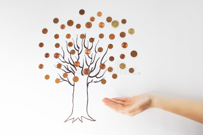A money tree. With coins and hand isolated royalty free stock photos