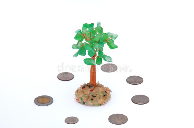 Money tree and coins on a light background. Feng Shui. stock photo