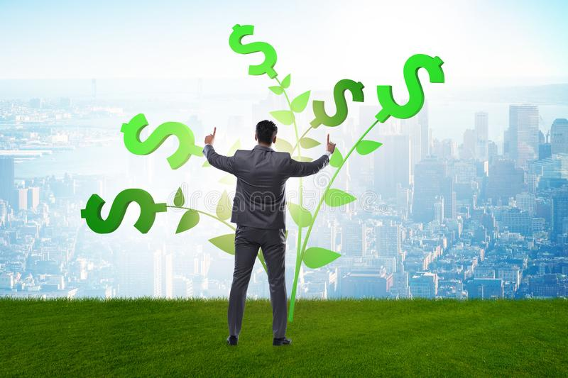 The money tree concept with businessman in growing profits stock photography