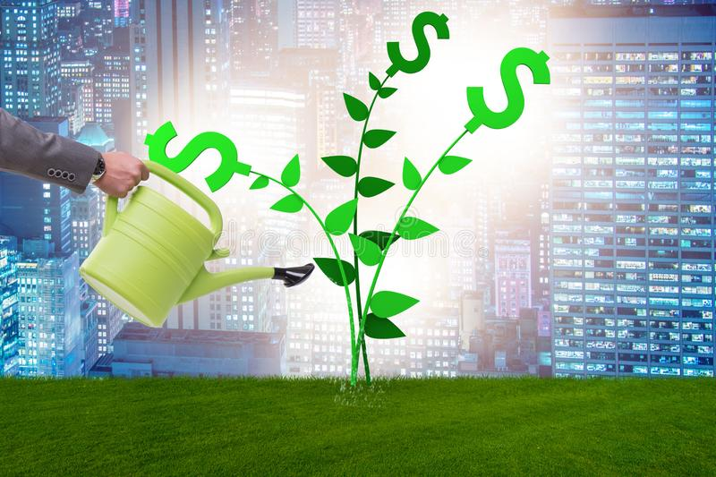 The money tree concept with businessman watering royalty free stock photography
