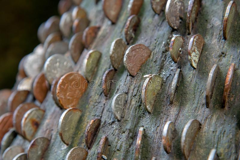 Money Tree in Cornwall stock image
