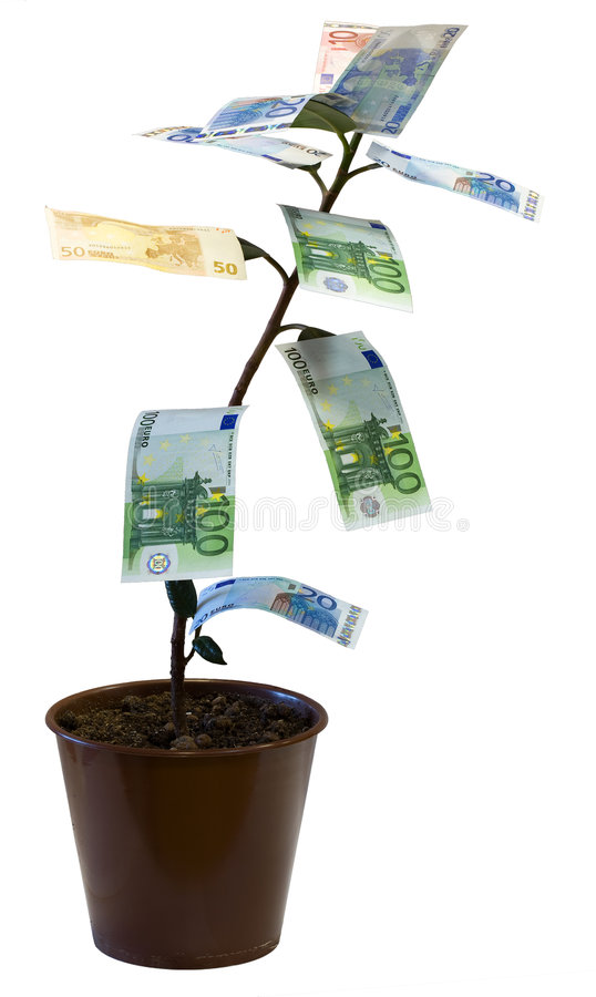 Money tree (Euro). Money tree, euro. Isolated on white royalty free stock photography