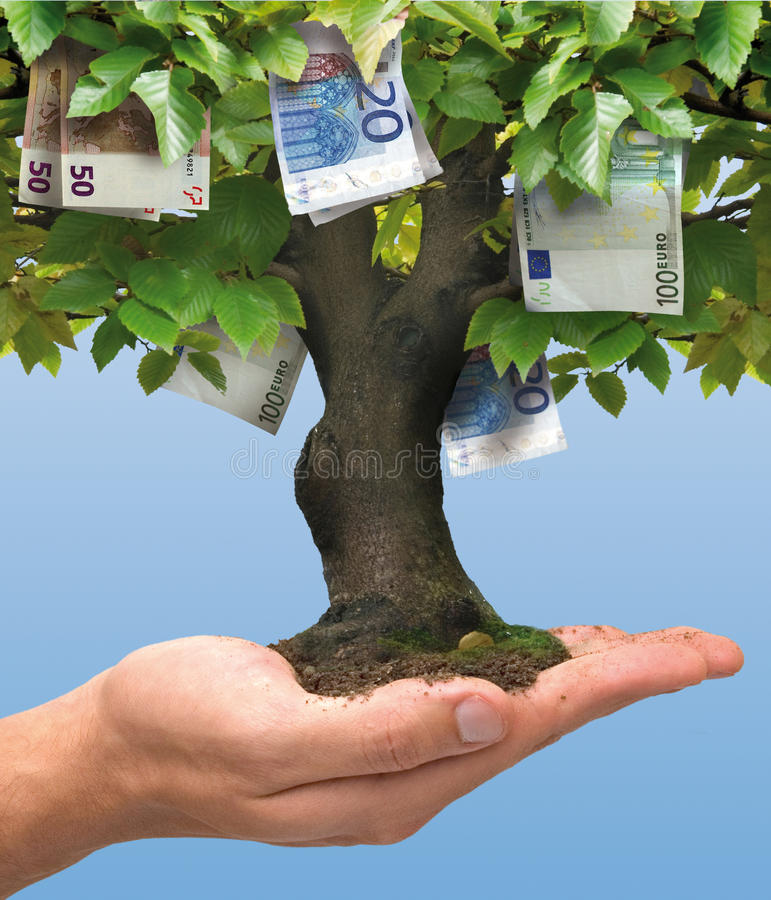 Money tree - euro. Business concept stock images