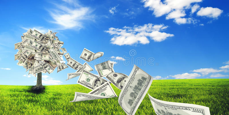 Money tree. Growing in the middle of green meadow stock image
