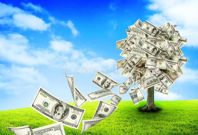 Money tree. Growing in the middle of green meadow stock images
