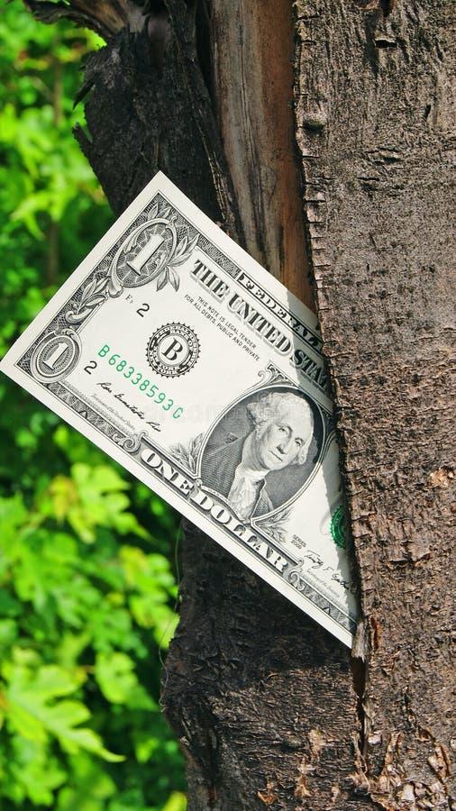 Download Money Tree Royalty Free Stock Photos - Image: 31360528