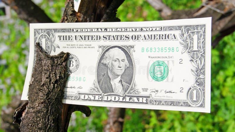 Download Money tree stock photo. Image of amount, bank, fine, green - 31360592