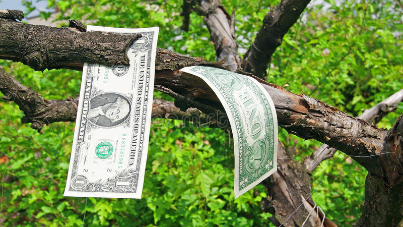Download Money tree stock image. Image of fine, growth, growing - 31360575