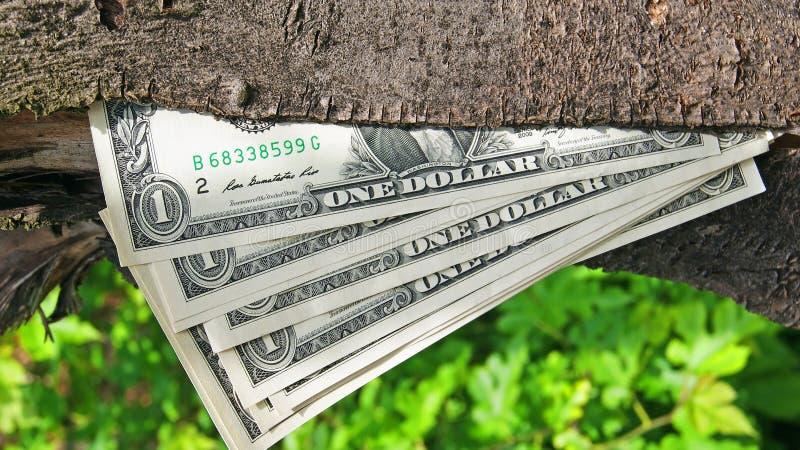 Download Money tree stock photo. Image of inflation, bills, economize - 31362202