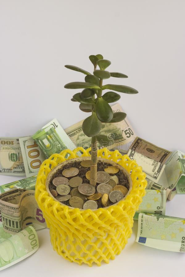 Money tree in the pot royalty free stock image