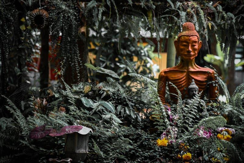 A monge idosa imagem de stock