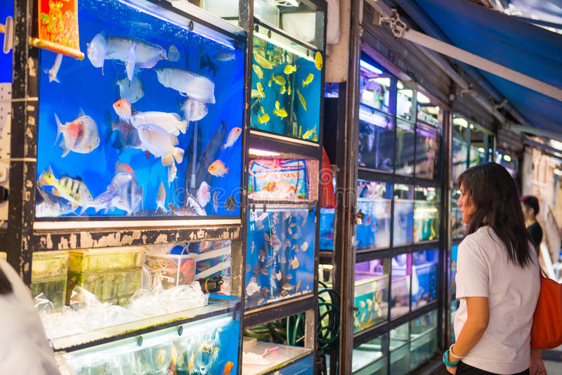 Mongkok, Hong Kong - 24 de septiembre de 2016: pescados para la venta en Goldf fotos de archivo
