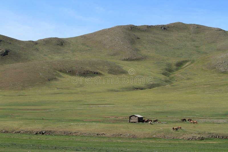 Mongoł natura i krajobraz zdjęcie royalty free