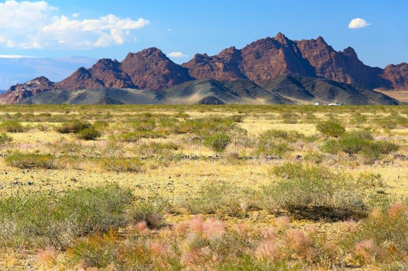 Mongoła krajobraz z górami i stepem obrazy royalty free
