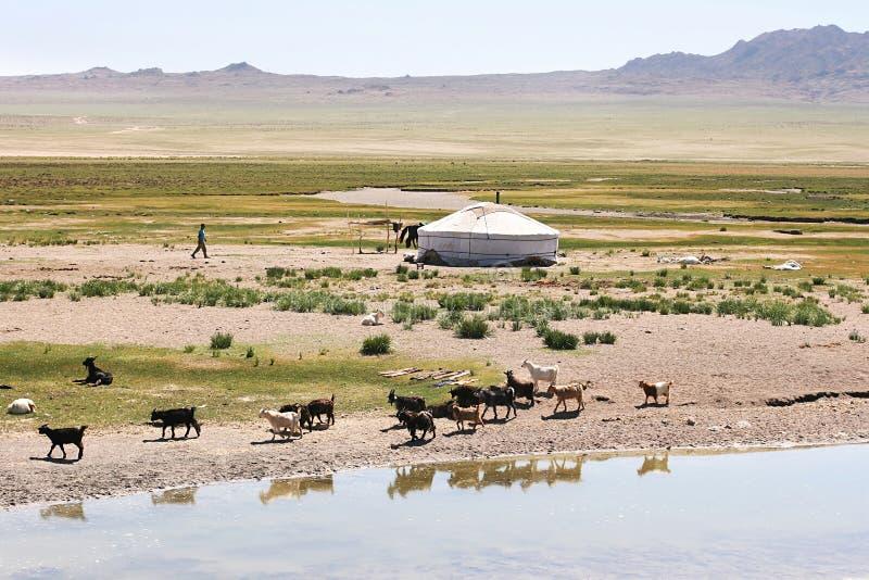 Mongolië stock foto's