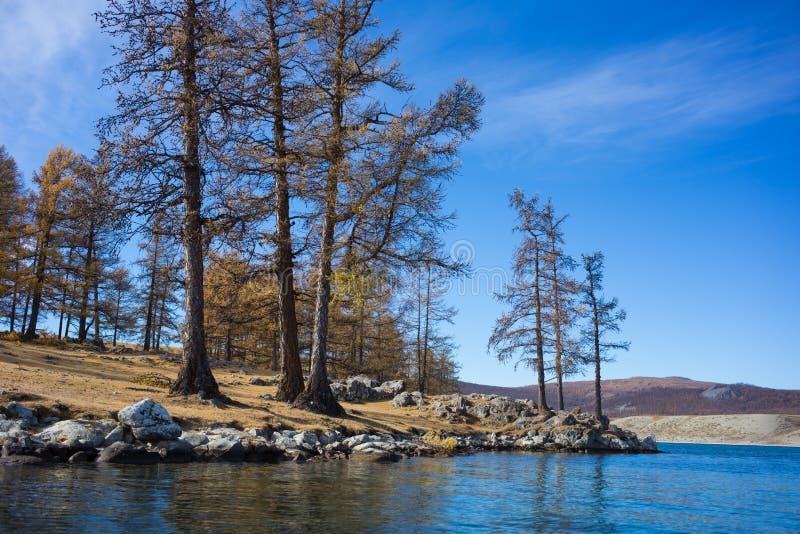 mongolia flod royaltyfri bild