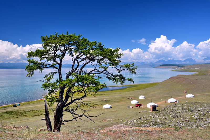 Mongolia, home of 6 Mongolian Yurt on the North shore of lake Hovsgol in the summer. Mongolia, a lonely larch in the foreground to the background of the Mongol stock images