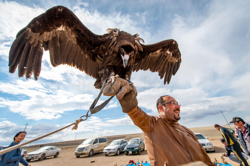 MONGOLIA - May 17, 2015: Specially trained eagle for hunting in mongolian desert near Ulaan-Baator. stock photo
