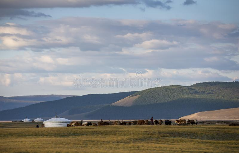 Family ger in a landscape of norther Mongolia stock photography