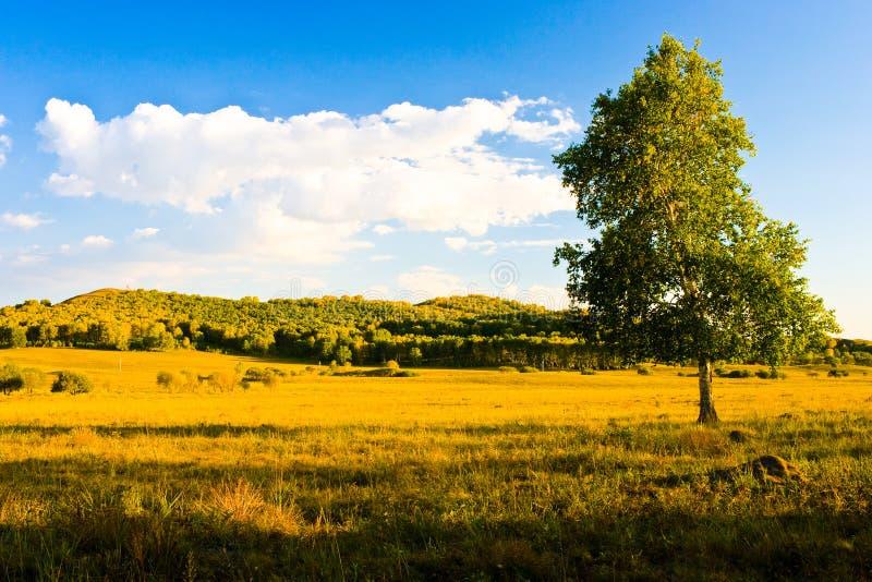 Mongolian grassland royalty free stock photography