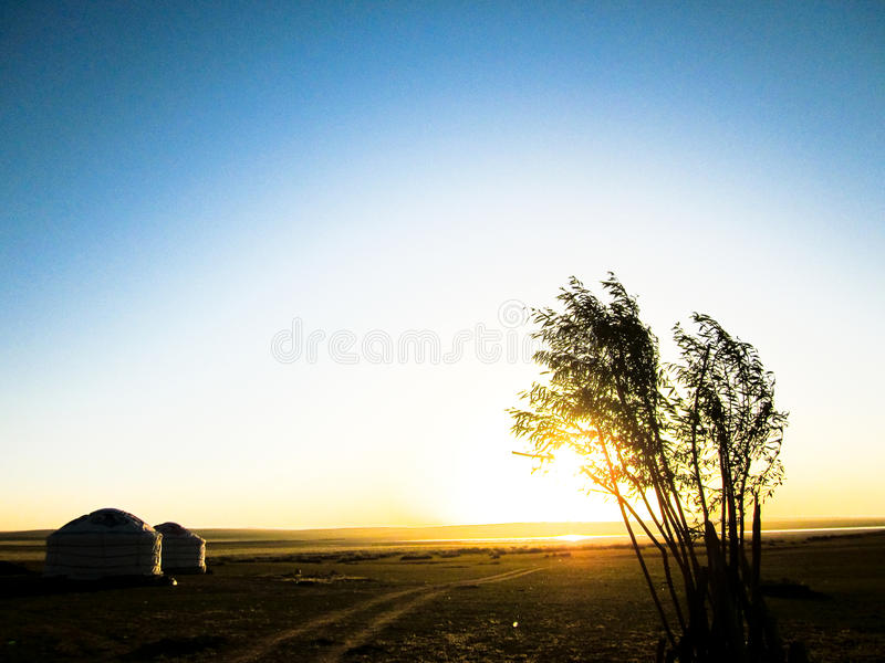 Mongolian landscape with trees and Yurt royalty free stock photography