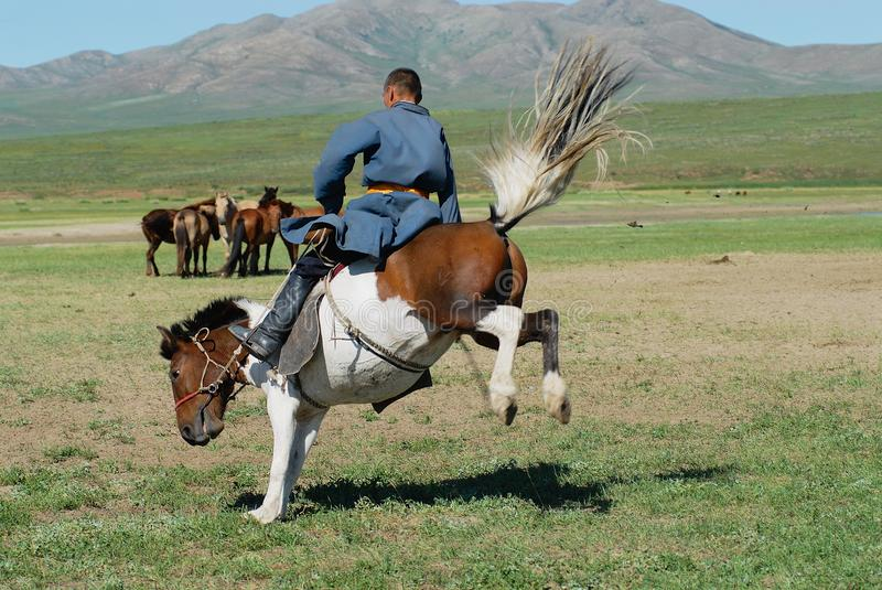 Mongolian man wearing traditional costume rides wild horse in a steppe in Kharkhorin, Mongolia. royalty free stock photo