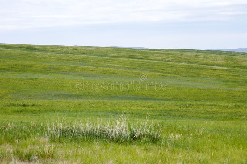 Mongolian Steppes. The vast grasslands of the Mongolian steppes stock photography