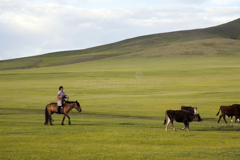 Download Mongolian Woman Herding Cattle Editorial Stock Image - Image: 36743639