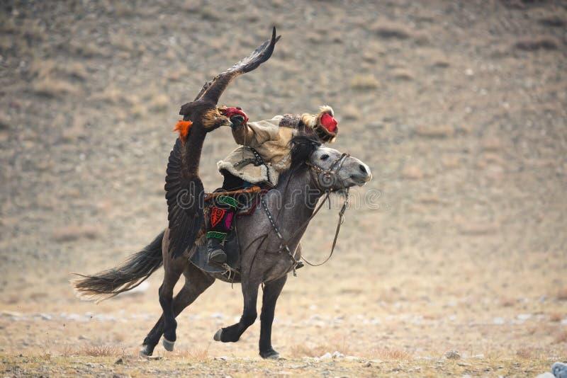 Mongoliet guld- Eagle Festival Rider On en Gray Horse With en storartade guld- Eagle och att fördela hans vingar och innehav dess arkivfoton