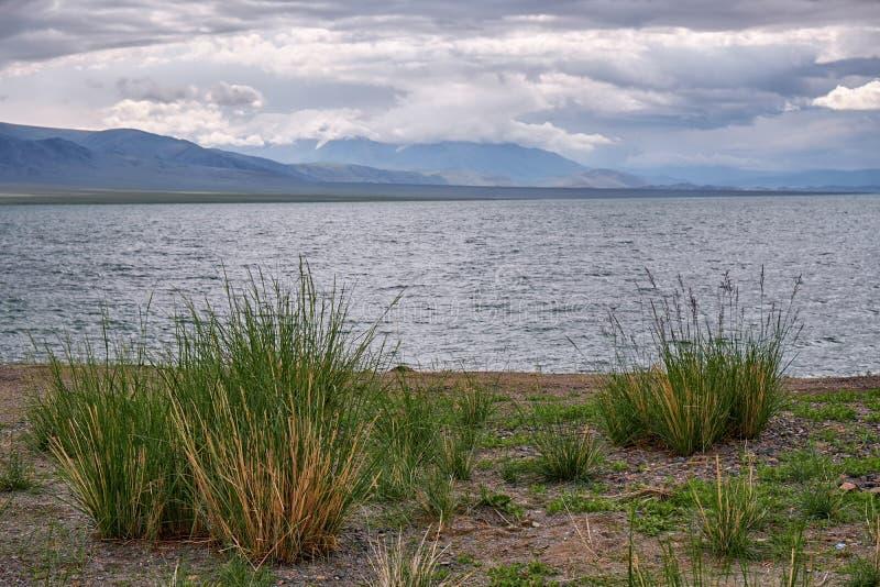 Mongolische Naturlandschaften mit Büschen von Gras Achnatherum Ne stockbilder