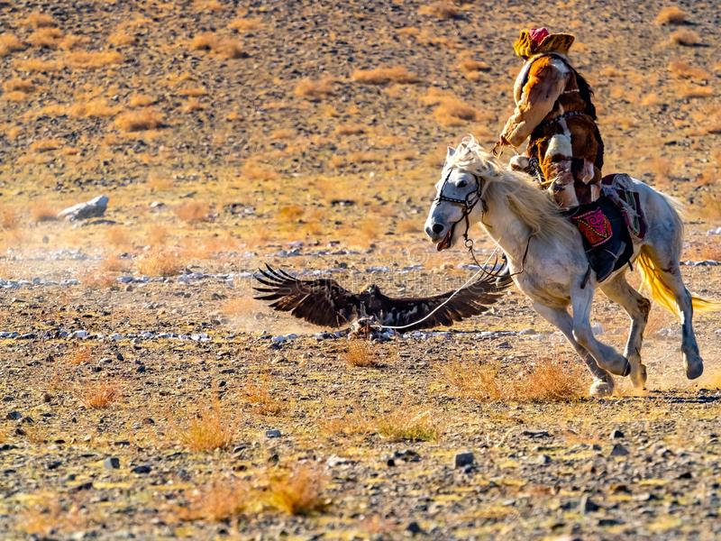 Mongools Eagle Hunter in de traditionele kleding van het vosbont schrijlings op op paard en de adelaarsjager valt de prooi op de  royalty-vrije stock fotografie