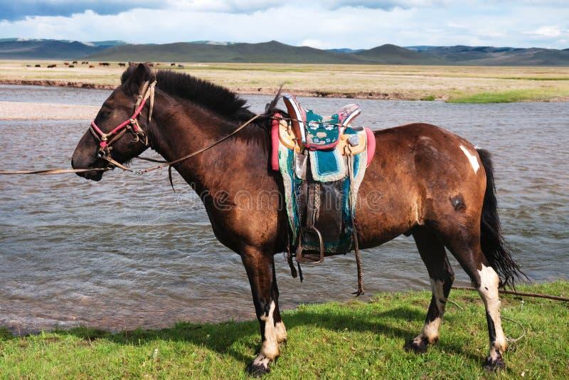 Mongools gezadeld paard royalty-vrije stock foto