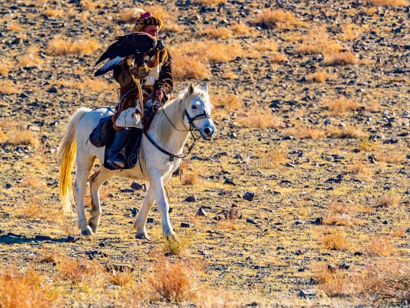 Mongools Gouden Eagle Hunter in traditionele de kledingszitting van het vosbont op horseback met goed - opgeleide gouden adelaars stock afbeeldingen