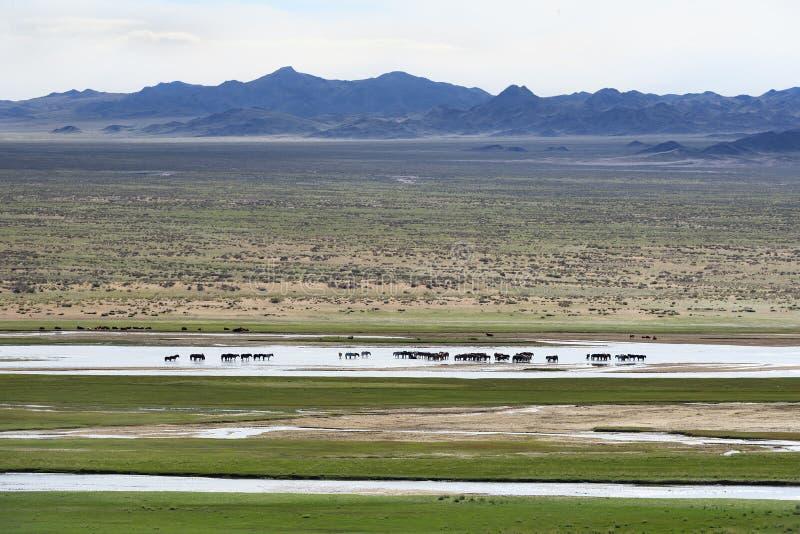 Mongools landschap met kudde van paarden royalty-vrije stock foto's