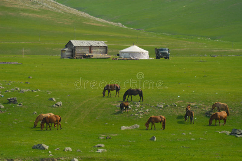Mongools landschap met paarden en yurts royalty-vrije stock afbeelding