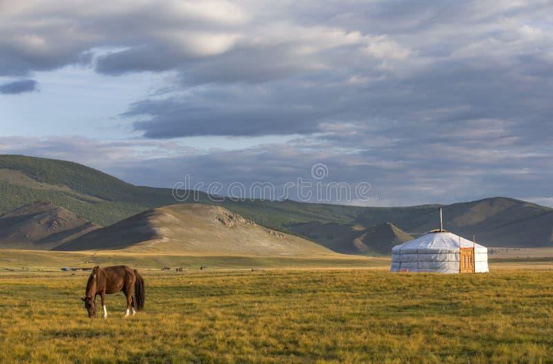 Mongools paard in een landschap van noordelijk Mongolië royalty-vrije stock afbeeldingen