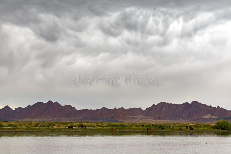 Mongools somber landschap stock foto's