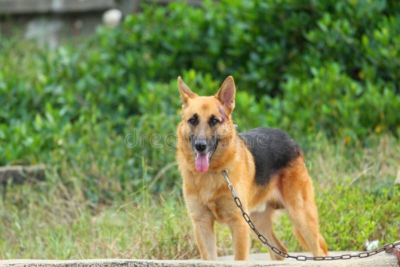 Download Mongrel dog stock photo. Image of brown, cross, angle - 21537336