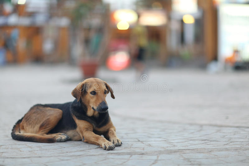 Mongrel dog outside. Pretty cheerful mongrel dog outside stock image
