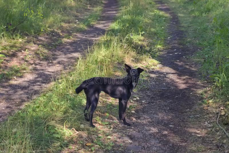 Mongrel puppy of black suit for a walk in the forest stock image