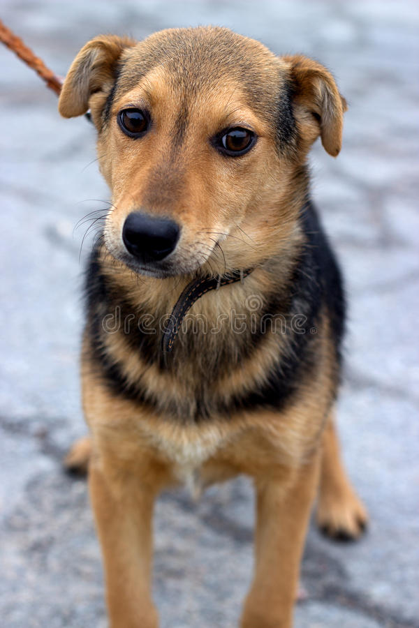 Mongrel puppy outdoors stock photo. Image of mixed, young ... Дворняжка Щенок