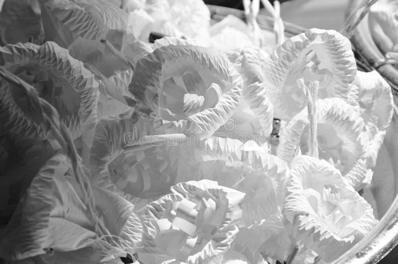 Monichrome-Sandelholzblume für im thailändischen Begräbnis auf Wanne absolut beklagen lizenzfreies stockfoto