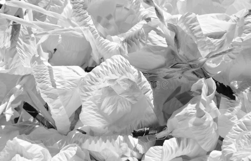 Monichrome-Sandelholzblume für im thailändischen Begräbnis auf Wanne absolut beklagen stockfotografie
