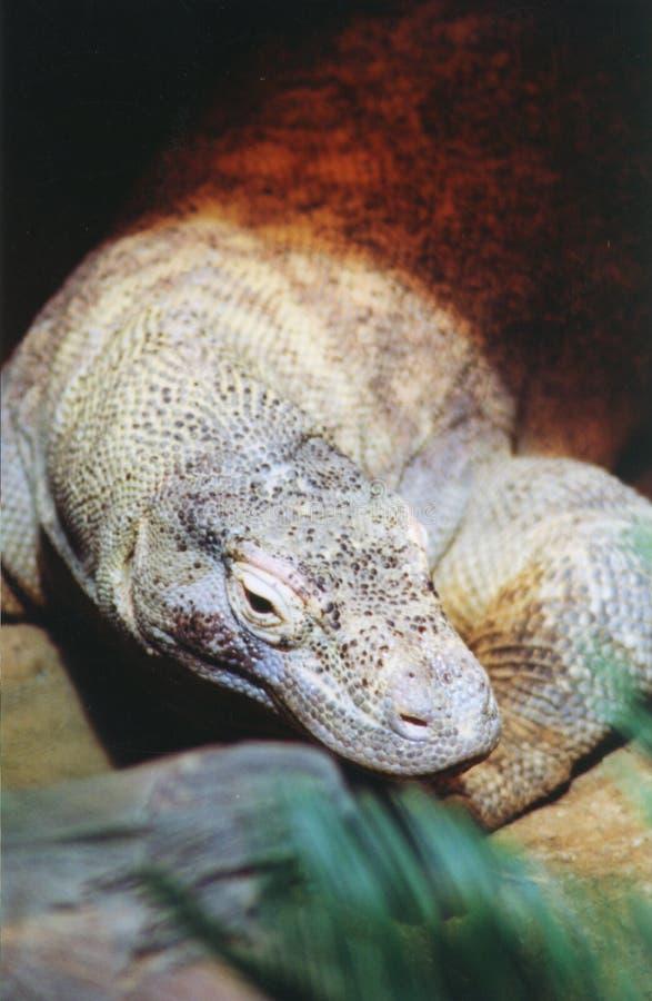 Moniteur de Komodo photo stock