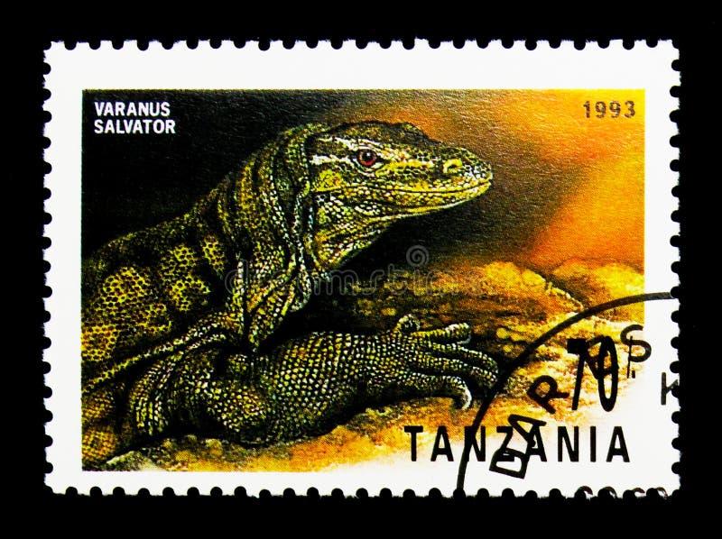 Monitor de agua (salvator) del Varanus, reptiles del serie de Tanzania, ci fotografía de archivo