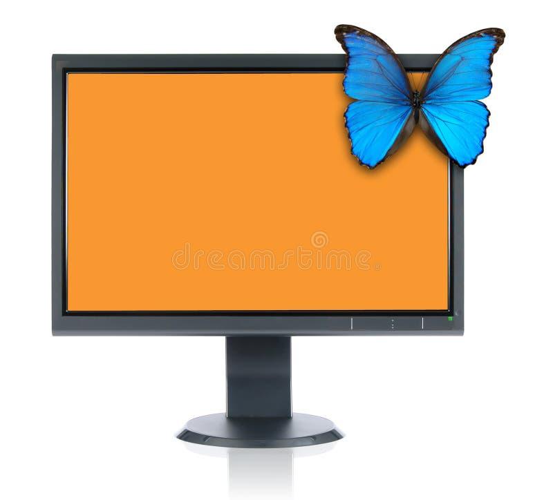 Monitor y mariposa azul imagen de archivo libre de regalías