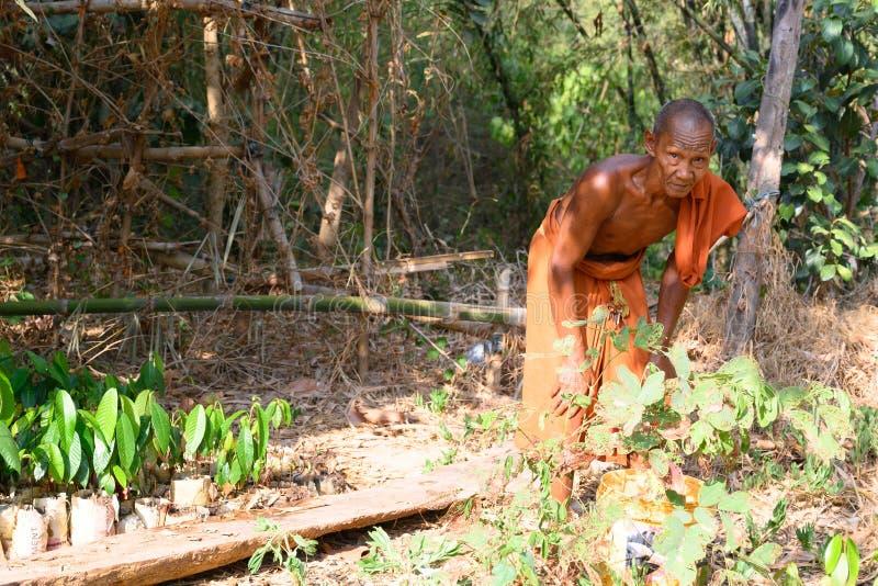 Monje budista en el jardín del monasterio en Camboya El monje toma el cuidado de plantas crecientes imagen de archivo